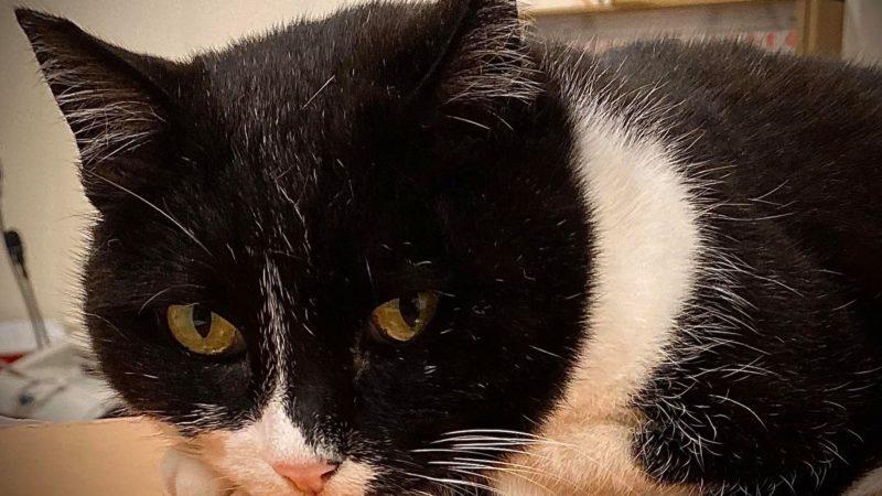 Ho vissuto con diversi maestri Zen – erano tutti dei gatti. cit. Eckhart Tolle